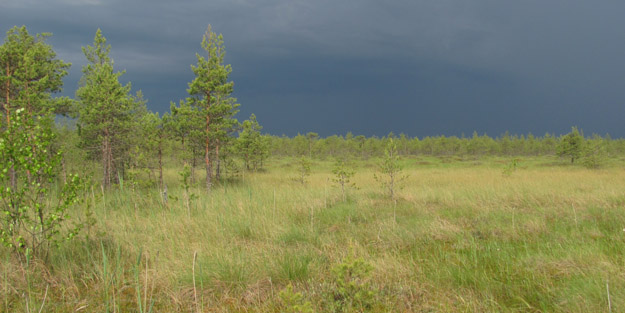 Batkovskoye bog in Sergiyevo-Posadsky Urban District. Photo by V.V.Kontorshchikov