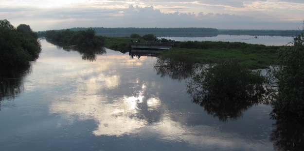 Overflowing Dubna River in June 2020. Photo by V.V.Kontorshchikov