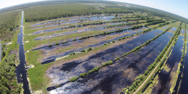 Flooded peat fields in June 2020. Photo by A.V.Makarov